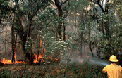 Fighting a Bushfire