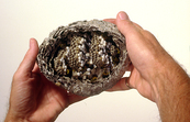 A European Wasps Nest [ID:55]