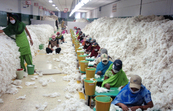 Manually decontaminating cotton before processing at an Indian spinning mill