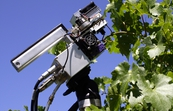 Photosynthesis and conductance being measured simultaneously in well-watered Cabernet Sauvignon vines during hot weather