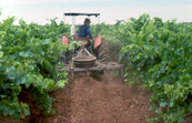A Tractor Cultivating a Vineyard [ID:2140]