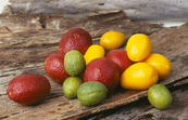 New lime varieties bred from native Australian limes