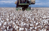 Cotton harvester [ID:3416]