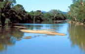 Sandbars choke the Murrimbidgee River near Jugiong, NSW