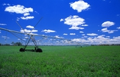 Irrigation spray boom in lucerne crop near Albury, NSW.