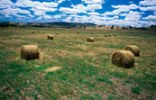 Bales of oaten hay near Albury, NSW. [ID:4567]