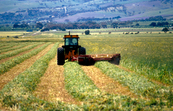 Cutting hay at Aldinga, south of Adelaide in South Australia. 1992.