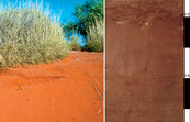 Red-Orthic Tenosol soil profile located 110 km south south-w... [ID:4572]