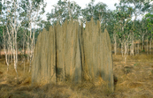 Termite mounds, Arnhem Land, NT. 1992.