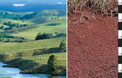 Red Ferrosol soil profile in the Atherton Tablelands of north Queensland