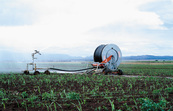 Spray irrigation of new sugarcane crop, Atherton. QLD