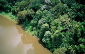 Aerial view of tropical rainforest adjoining the Barron River near Cairns, northern Queensland. 2000.