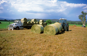 Loading round hay bales onto a truck at Bega, NSW, November 2002.