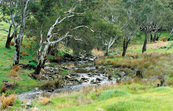 Stream near Birdwood on road to Mount Pleasant. SA.