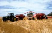 Harvesting wheat at Blyth in the mid north of South Australia. 1986.