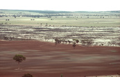 Salinity in the Western Australian wheatbelt near Bruce Rock, WA.