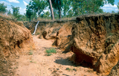 Erosion gully near Cardigan, far north Queensland. 1992.