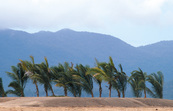 Palms planted along marina entrance at Port Hinchinbrook Res... [ID:3703]