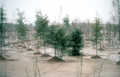 Revegetation of degraded site, northern China. 1991.