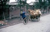 Transporting fuel in village, northern China. 1991. [ID:4502]