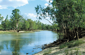 View of Punkah Creek, Chowilla. SA.