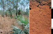 Red Kandosol soil profile in the Darwin district, Northern Territory