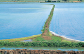 Irrigation channel and flooded rice bays near Griffith, NSW.... [ID:4663]