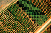 Aerial view of orange orchard and grape vines at Griffith, NSW.