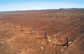 New trickle (dripper) irrigation system at McWilliams vineyard near Griffith, NSW.