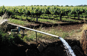 Vineyard tile drainage pump discharging water into drainage channel. Griffith, NSW.