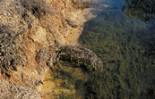 Algae growth in drainage channel, Murrumbidgee Irrigation Ar... [ID:4708]