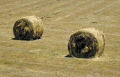 Baled hay (rolled), Murrumbidgee Irrigation Area, near Griffith, NSW.