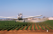 Aerial spraying, using fungicides/herbicides, of a carrot cr... [ID:7280]