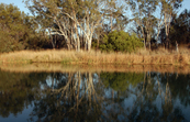 Reflections along the banks of the River Murray