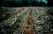 Residue Treatment of Plantation Harvest [ID:643]