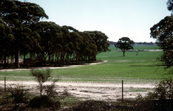 A paddock containing native remnant vegetation to promote bi... [ID:620]