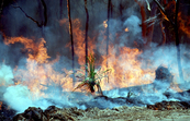 Controlled Burning During Dry Season