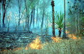 Authorised Burning in the Top End [ID:395]