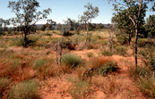 Fertile Clumps of Scrub in Savannas