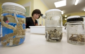 Preserved amphibian specimens at CSIRO's Australian Na... [ID:11236]