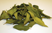 Dried Lemon Myrtle Leaves - Backhousia citriodora