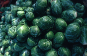 Brussel Sprouts [ID:2453]