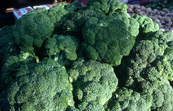 Broccoli [ID:2594]