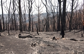 The Kinglake National Park after the 'Black Saturday' bushfi... [ID:10439]