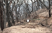 The Kinglake National Park after the 'Black Saturday' bushfi... [ID:10318]