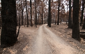 Private road leading to damaged property at Kinglake after t... [ID:10393]