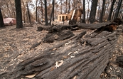 Destroyed property at Kinglake after the 'Black Saturday' bushfires