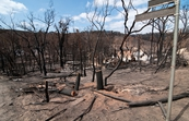 Burnt trees and property at Strathewen after the 'Black Satu... [ID:10516]