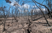 Kinglake National Park after the 'Black Saturday' bushfires [ID:11065]