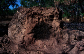 A Damaged Termite Mound [ID:1155]